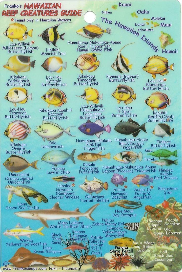 Hanalei Bay Tide Times, Tides Forecast, Fishing Time and ...