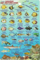Hawaiian Islands, Reef Creatures Fish ID Mini Card by Frankos Maps Ltd.