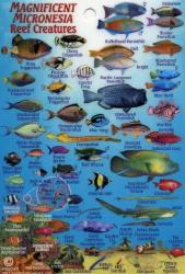 Magnificent Micronesia Reef Creatures by Frankos Maps Ltd.