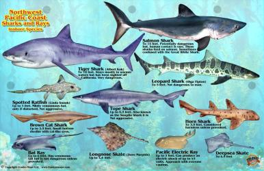 Northwest Pacific Coast Sharks and Rays Offshore Species by Frankos Maps Ltd.