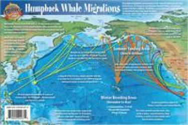 Pacific Humpback Whale Migration and Whale Life Cycles Laminated Card by Frankos Maps Ltd.