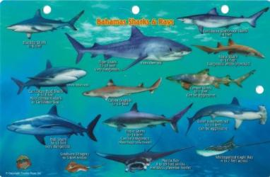Bahamas Sharks & Rays by Frankos Maps Ltd.