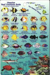 Hawaiian Reef Creatures Guide by Frankos Maps Ltd.