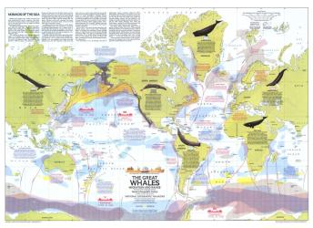 1976 Great Whales, Migration and Range Map by National Geographic Maps