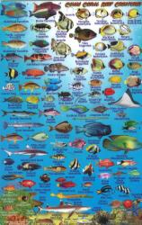 Guam, Reef Creatures of Guam by Frankos Maps Ltd.