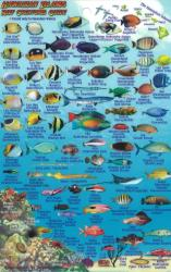 Hawaiian Islands, Reef Creatures Fish ID Card, 2012 by Frankos Maps Ltd.
