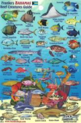 Bahamas Fish Card, Bahamas Mini Fish Card 2011 by Frankos Maps Ltd.