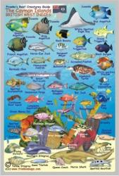 Caribbean Fish Card, Cayman Islands Mini 2010 by Frankos Maps Ltd.