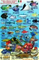 Mexican Caribbean Fish Mini-Card, 2007 by Frankos Maps Ltd.