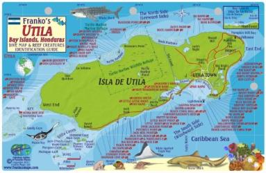 Caribbean Fish Card, Utila, Honduras 2011 by Frankos Maps Ltd.