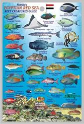 Franko's Egyptian Red Sea Reef Creatures Guide by Frankos Maps Ltd.