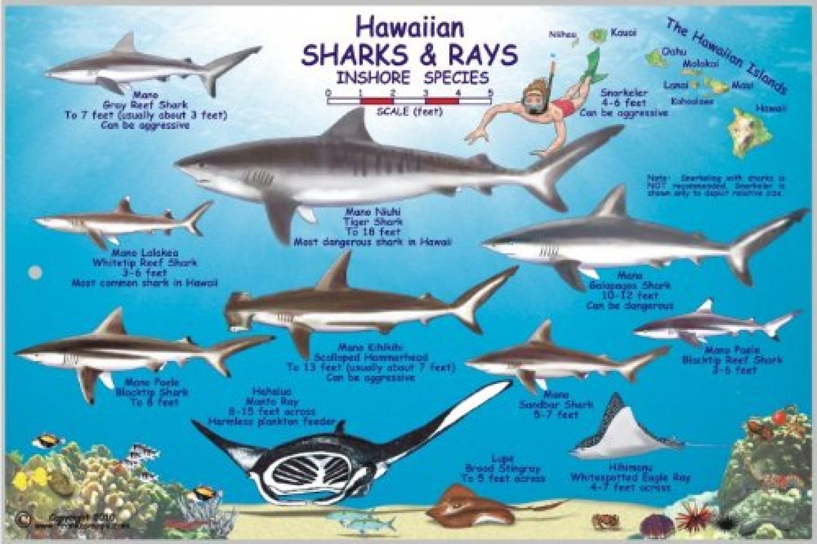 Hawaiian sharks and rays offshore and inshore species by for How many fish are in the world