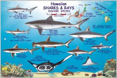 Hawaiian Sharks and Rays Offshore and Inshore Species by Frankos Maps Ltd.