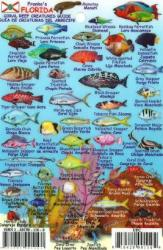 Florida Keys Mini Fish ID Card by Frankos Maps Ltd.