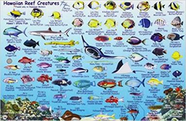 Hawaiian Reef Creatures Guide, 2007 by Frankos Maps Ltd.